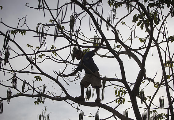 A child plays in a tree : Niquinohomo, Nicaragua